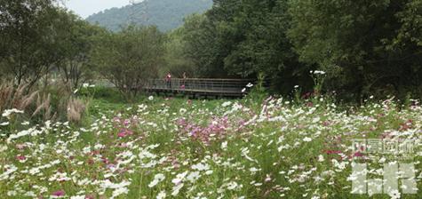 修回                    2008年10月初,杭州西湖风景